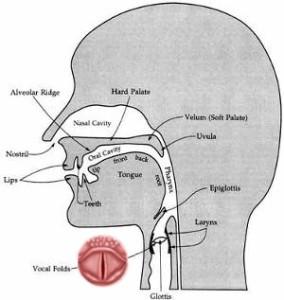 The voice is a subtle mixture of sounds from the throat, mouth and lips.