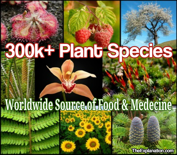 300,000+ Plant species worldwide are particular not only to continents, but to countries, areas and soils.