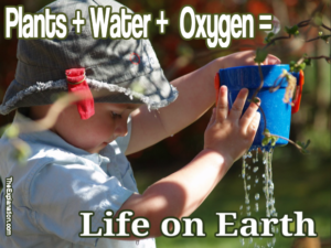 If it weren't for plants and water, which produce our nutrients and oxygen, there wouldn't be any life on Earth.