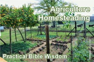 Agriculture on an individual level, homesteading. Practical Bible Wisdom.