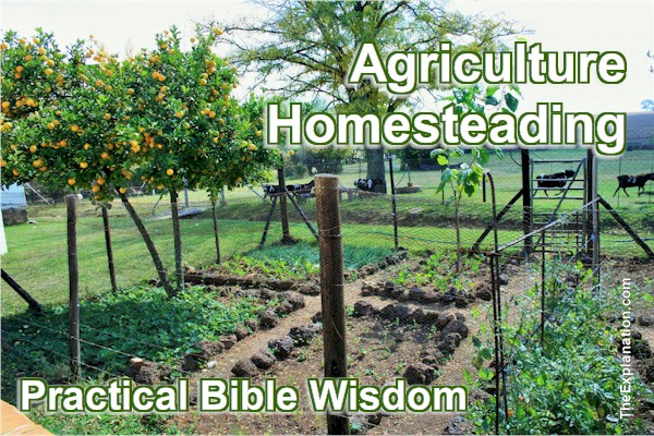 Agriculture – Practical Bible Wisdom for the 21st century