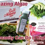 Amazing algae food and products. Seaweed is a useful resource and humanity can do it right ... if it wants to.