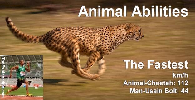 Animal Abilities – Animal Communication – It's unimaginable