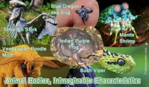Animal Bodies all shapes, sizes, forms and characteristics