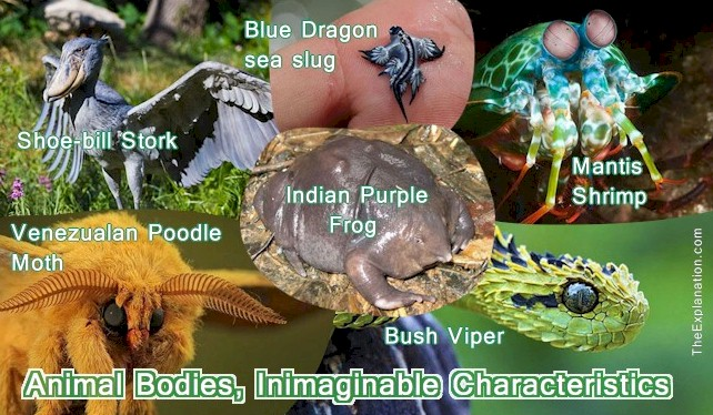 Animal Bodies, Abundant & Exquisite Shapes, Sizes, and Forms