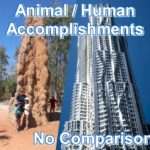 Animal accomplishments compared to human accomplishments don't even make it onto the graph chart. Animals take no initiative and only accomplish what their instincts allow them.