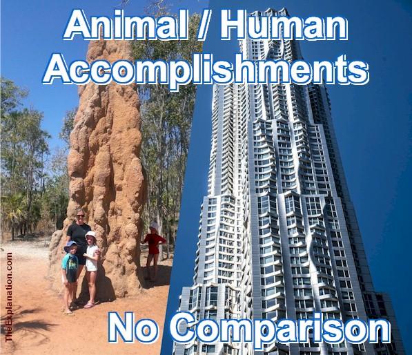 Animal Accomplishments are 'Zero' compared to Human Accomplishments