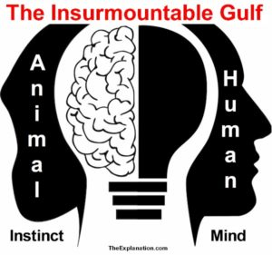 Animal instinct versus human intelligence. Who comes out ahead? There's no doubt animals have a 'certain intelligence' beyond their instinct ... but does that give them an edge?