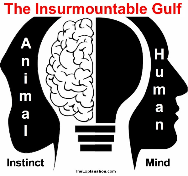 Animal Instinct and Human Intelligence, the Insurmountable Gulf