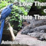 The Animal Kingdom with its beautiful biodiversity should cause mankind to sit up and think ... They are fascinating.