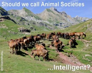 Animal Societies - Ants, Apes Fish, Horses and even Bacteria Organize their own Communities to obtain Favors and Benefits.