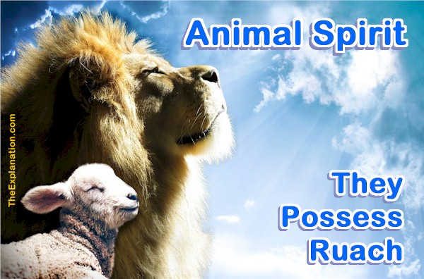 Animal Spirit is Not Spirit Animal But They are Related