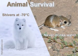 Animal survival in all types of extremes, heat, cold, depths, altitudes and movement speed and endurance are far superior to Mankind. Humans, without their ingenuity, don't stand a chance.
