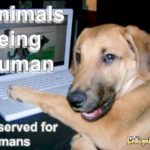Animals being human. It's a good try but it has to be set up by humans. Humans are characterized by the possession of cognitive abilities that come from the mind.