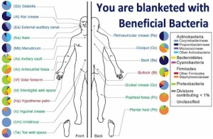 Your body blanketed by beneficial bacteria