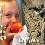 The same word in Biblical Hebrew, 'lacham' means both 'eat' and 'war'. How can the same word have opposite meanings?
