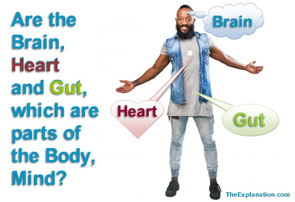 Body and Mind – Are the Brain, Heart and Gut–all Body Organs–the Mind?