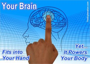 The Brain ... you don't even think about it ... but it is the Control Centre that allows you to function in a Human Manner. Physically it fits into your hand but Bodily it powers your Being.