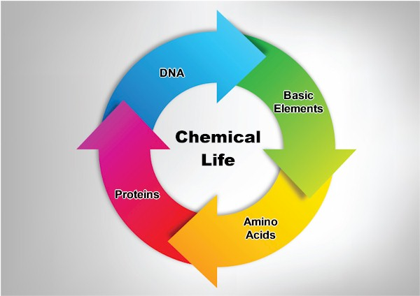 Chemical life includes starts with basic elements > amino acids > proteins > DNA...