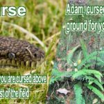 Curse. The Serpent is cursed about every other animal. The ground is cursed for Adam's sake.