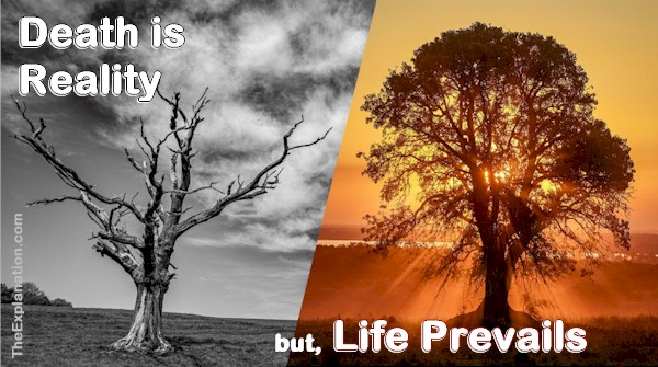 Death is reality but Life prevails in God's plan.