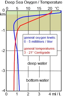 Deep Seat Oxygen and Temperature comparisons. Near the surface light penetrates the water promoting photosynthesis,and the production of oxygen.
