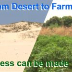 Fertile farmland from the desert. Progress is being made along the Great Green Wall in the Southern Sahara to recuperate land, grow crops and fortify communities.