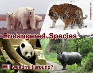 Endangered species. Humanity has managed to put numerous animal species in jeopardy of survival. Can we turn it around and bring animal biodiversity back to life.