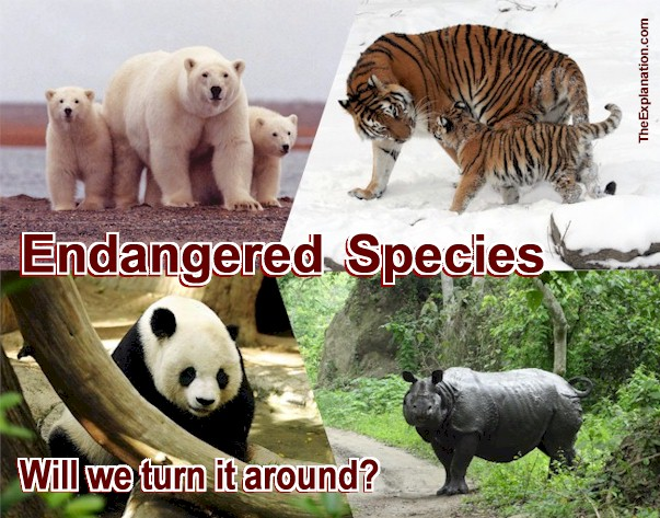 Endangered Species of Animals have Humans Focused on Fauna