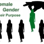 The Female Gender. Do we need it? What is their purpose, if any? Why did God create them like they are?