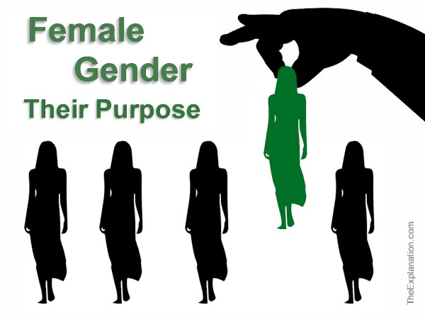 Female Gender, its Significance and Why God Created it