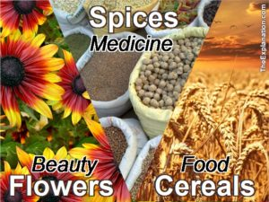 Flora: Flowers for beauty, oxygen. Spices for health, medecine and flavor. Cereal for food and fertilizer.