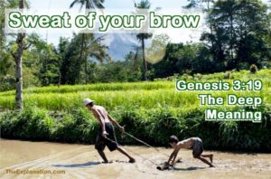 Genesis 3:19. By the sweat of your brow you shall eat bread.