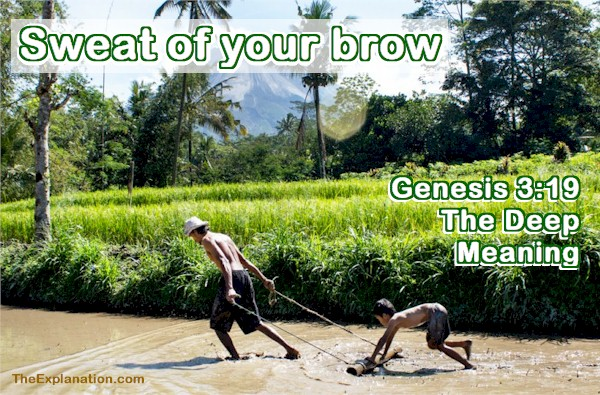 Genesis 3:19, Sweat of Your Brow. The Deep Meaning