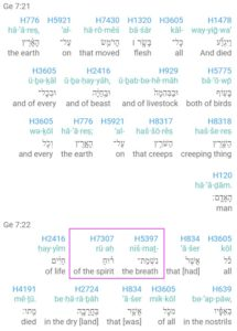 Genesis 7.21-22 Notice the two Biblical Hebrew words nishmat ruach (breath of the spirit). You don't see this in most English translations.
