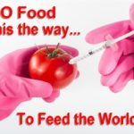 GMO Food. Is this the way want to feed the world? Is love of the land and agriculture only about feeding stomachs? Isn't there much more to it than that?