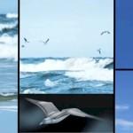 Seagulls and SmartBird
