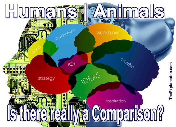 Intelligence is common to both animals and mankind. But, do they possess intelligence to the same degree? And what about the level of their minds and instincts?