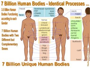 The human body defies imagination. We take it for granted. Seven billion on the planet all functioning identically yet 3.5 million men and 3.5 million women - 2 totally different but complementary sexes, and each body unique. How can that be?