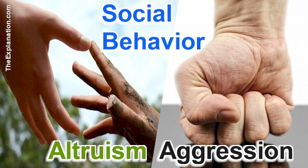 Social Behavior. The third ingredient in how humans function. the result of our mixture of human nature and free will yields altruism or aggression.