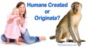 Were humans created or did humans originate from lower forms of life? Let's answer that.
