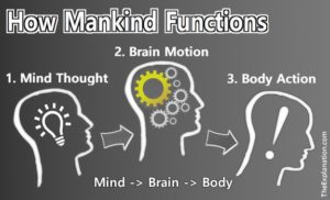 How Man Function: The mind has thoughts, the brain receives/transmits, and then the body acts.