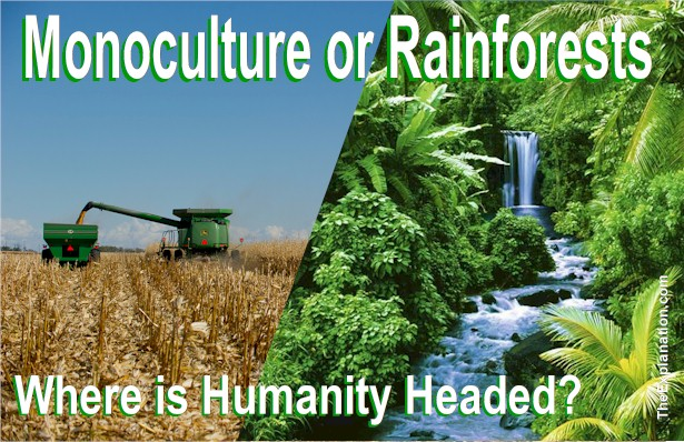 Rainforests or Monoculture? Biodiversity is the Medium of Our Survival