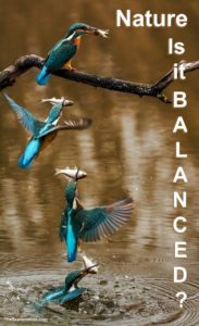 Nature, our environment, animals, fish, birds ... is humanity helping keep it all balanced?