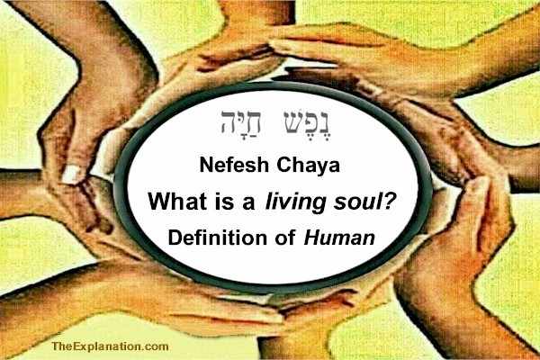 Nefesh chaya. What is a living soul? The definition of what it is to be human.