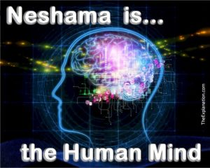 God breathed neshama into the first human being. Neshama is the human mind that endows us with our human singularities.