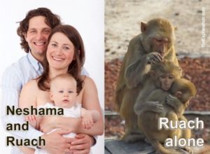 Neshama and Ruach are the components that make humans human. While animals only possess Ruach.