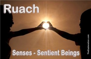 Ruach. At the origin of intangible senses. Senses are the reason living beings are sentient beings.