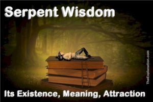 Serpent wisdom. Its existence, meaning and attraction. Humans are fascinated by this debilitating wisdom.