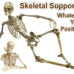 Your skeleton supports your body no matter what position you take. And some people can take weird positions! But, the skeleton does so much more ...